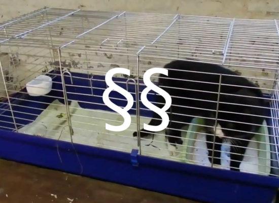 Kathrin Ströber Versicherungsmakler: Tierschutzgesetz-Novelle 2016 enttäuschend
